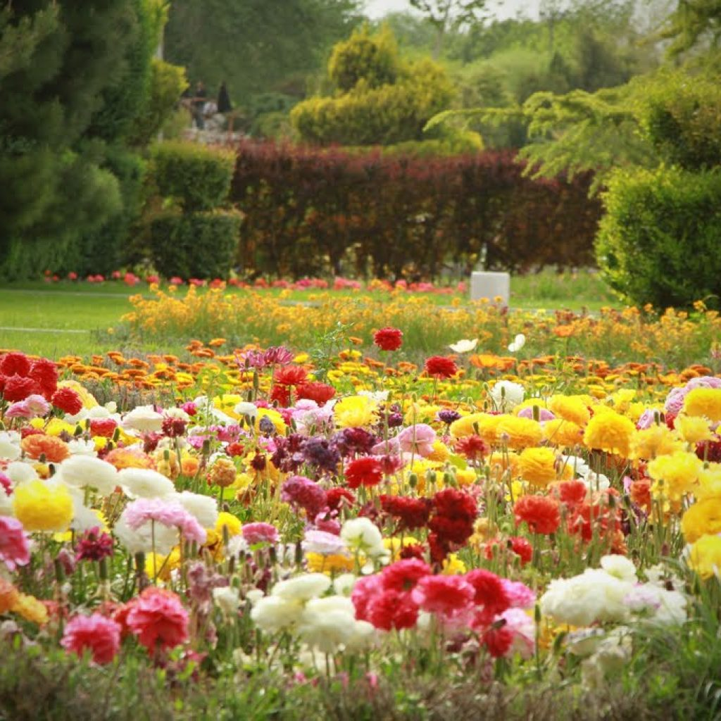 Iran birds and flower gardens of isfahan tripadvisor for Flowers and gardens pictures