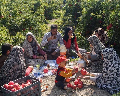 Iran pomegranate