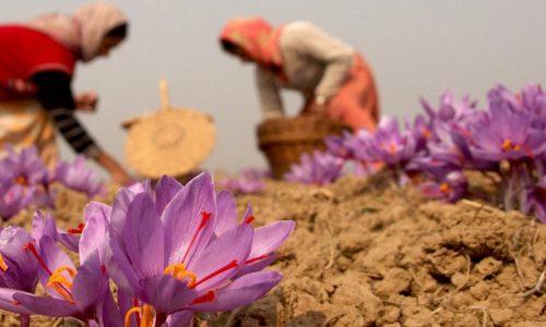 iran-saffron-barberry-tour-iran-a-1500-630