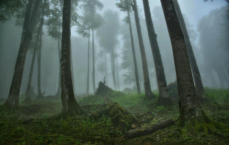 6 Giorno: Bandar Anzali- Parco foresta di Gysoom -Foresta dell'Hyrcarnian -Asalem