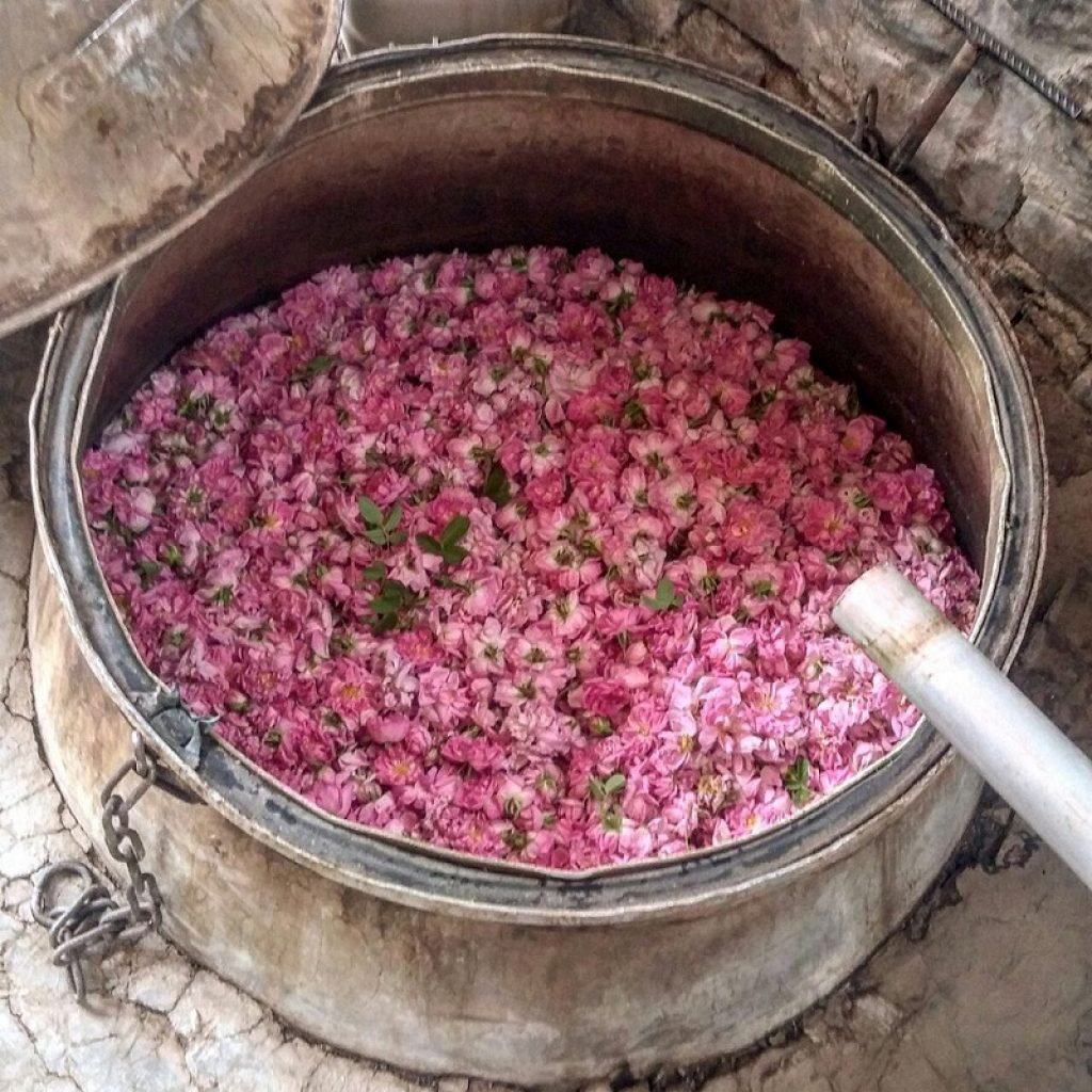rose-water festival in Iran