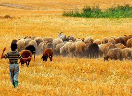 iran tours.iran nomads tour.friendlyiran.com