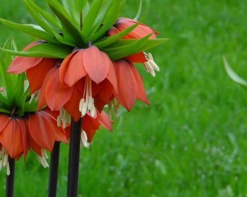Iran special tour.Iran Fritillaria tour.Highlights of Iran .8 days tour of Iran