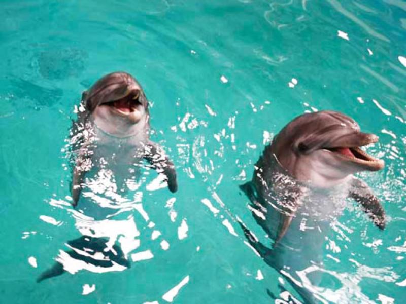 park-dolphin.Iran blog.Iran tour.Dolphin